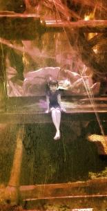 Fairy...